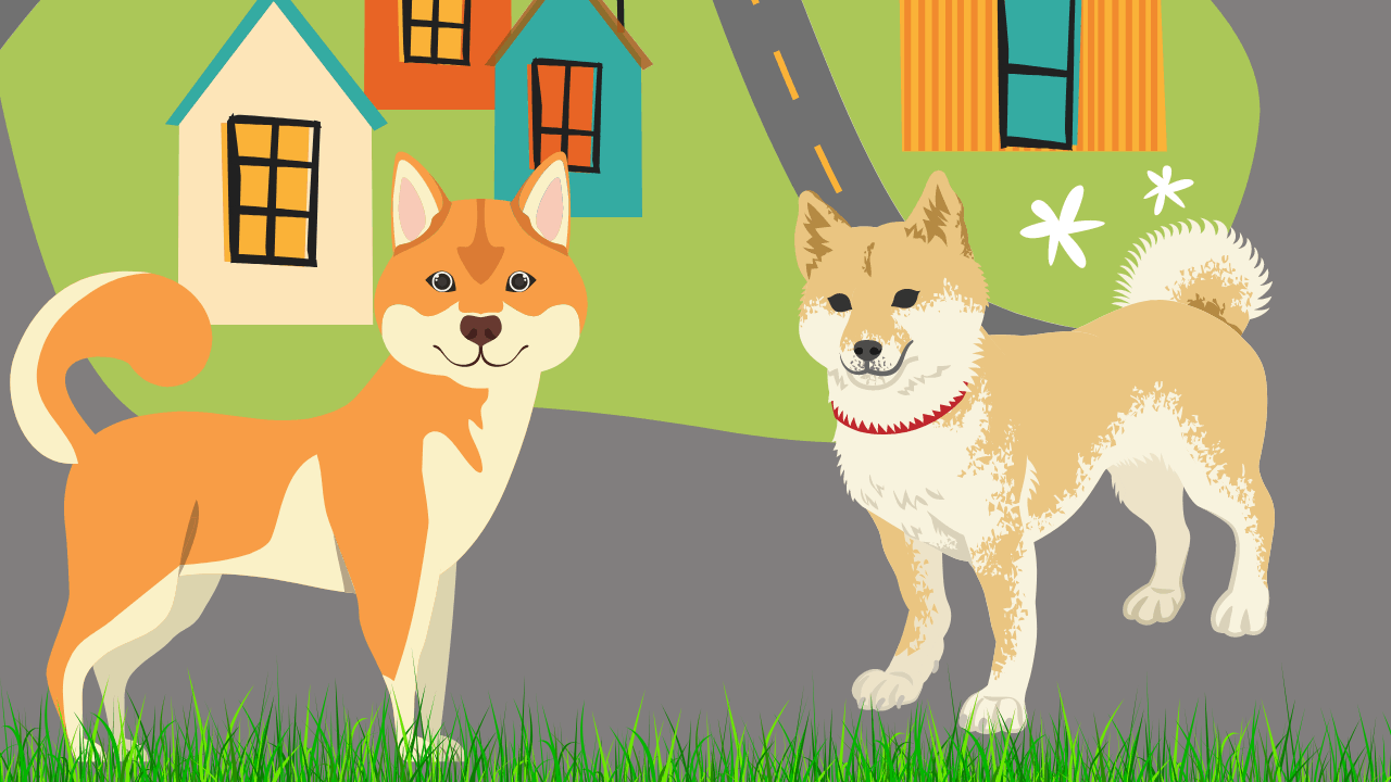 How Often Does A Shiba Inu Need To Be Groomed